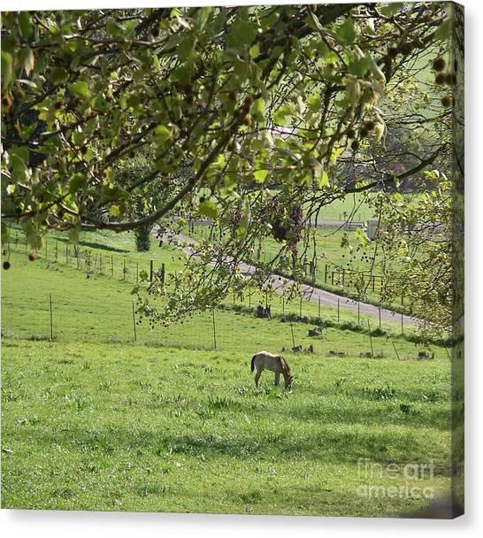 Grazing Under The Oak Tree Canvas Print