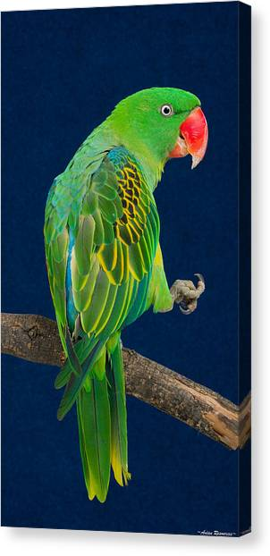 Great-billed Parrot 1 Canvas Print