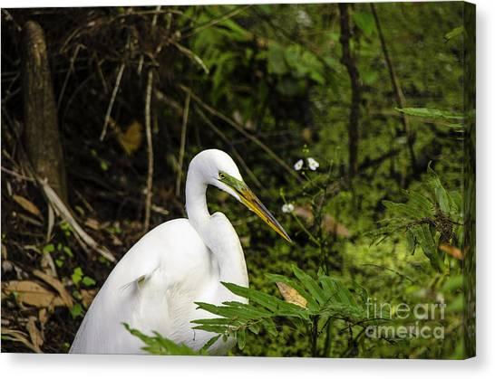 Great Blue Heron - White Canvas Print