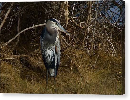 Great Blue Heron 2 Canvas Print