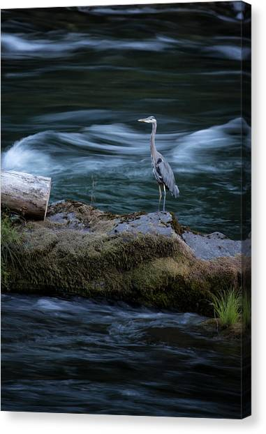 Canvas Print featuring the photograph Great Blue Heron by Belinda Greb