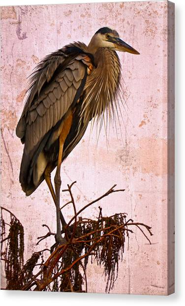 Great Cypress Canvas Print - Great Blue Heron by Debra and Dave Vanderlaan