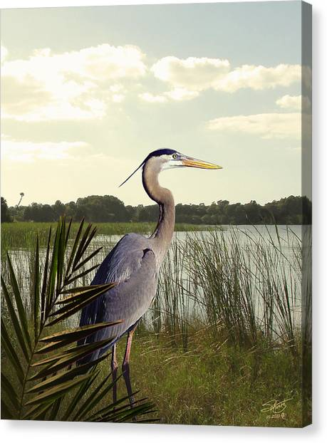 Great Blue Heron In The Bulrushes Canvas Print by M Spadecaller