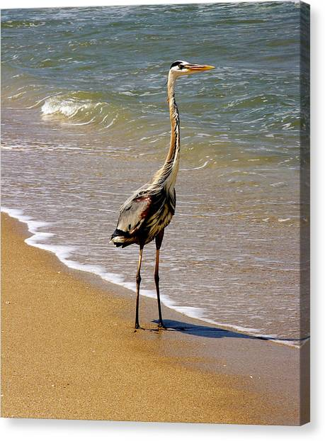 Great Blue Heron On The Surf. Canvas Print
