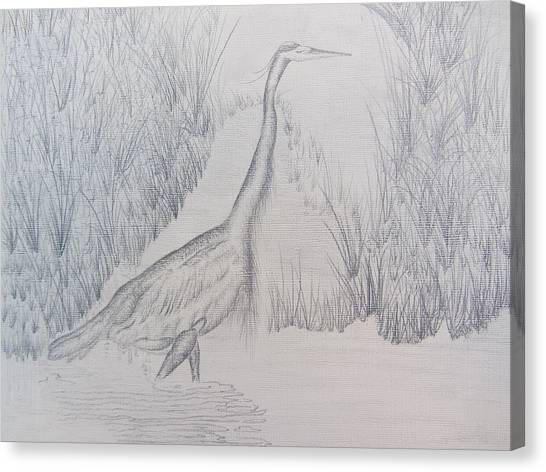 Great Blue Heron Pencil Drawing Canvas Print by Debbie Nester