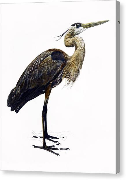 Great Blue Heron Canvas Print by Rachel Root