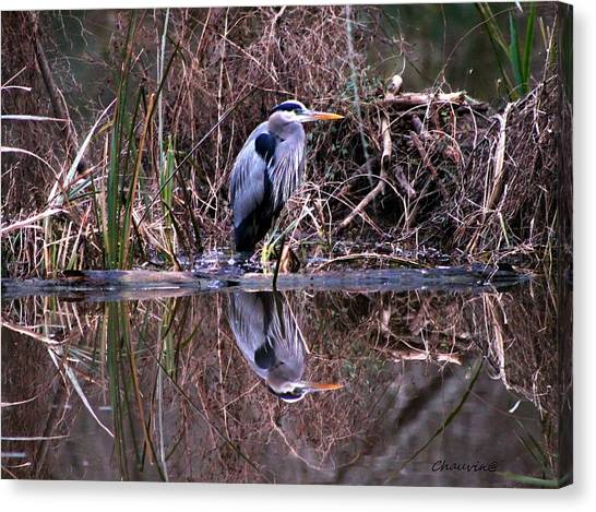 Great Blue Heron Reflecting Canvas Print by Gene Chauvin