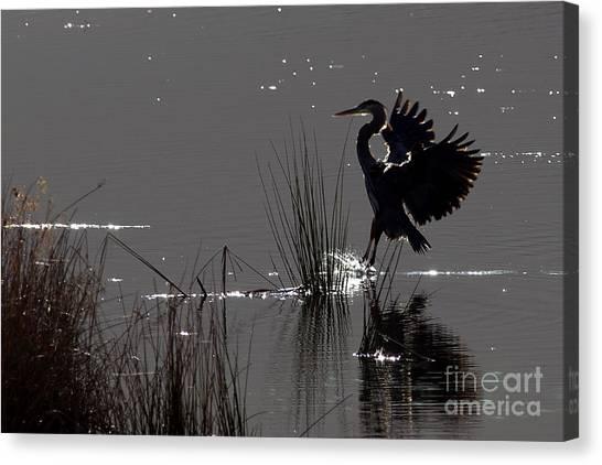 Great Blue Heron Silhouette Canvas Print