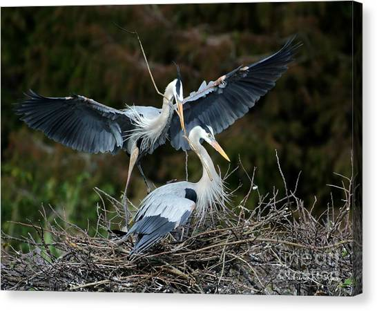 Great Blue Herons Nesting Canvas Print