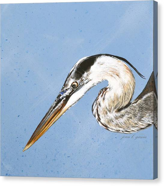Great Blue Tyler Canvas Print