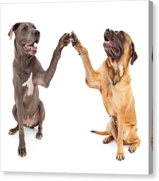 Mastiffs Canvas Print - Great Dane And Mastiff Dogs Shaking Hands by Susan Schmitz