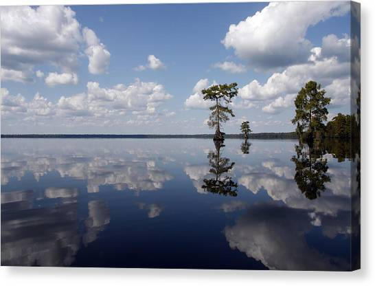 Great Dismal Canvas Print - Great Dismal Swamp by Debby Zimmerman