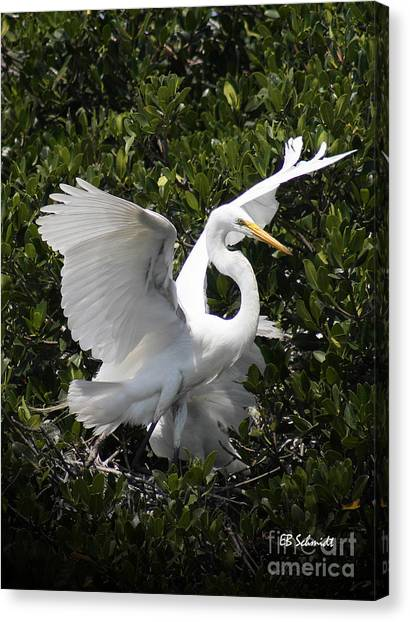 Great Egret 03 Canvas Print