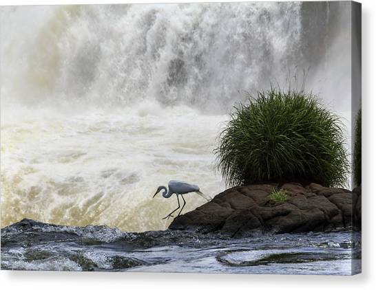 Iguazu Falls Canvas Print - Great Egret At Iguazu Falls by Alfred Pasieka