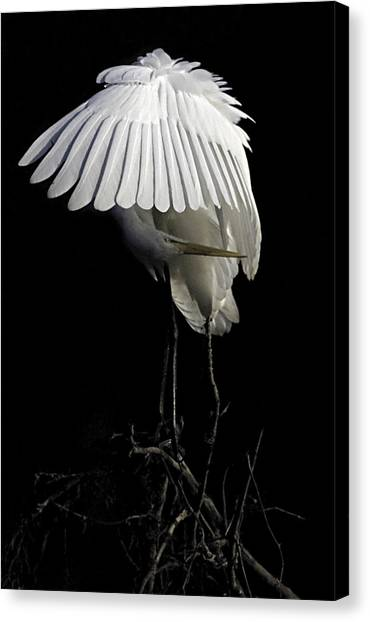 Great Egret Bowing Canvas Print
