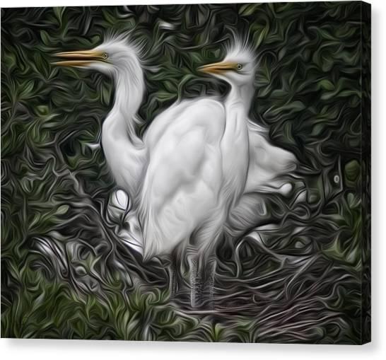 Great Egret Chicks Canvas Print by Hazel Billingsley
