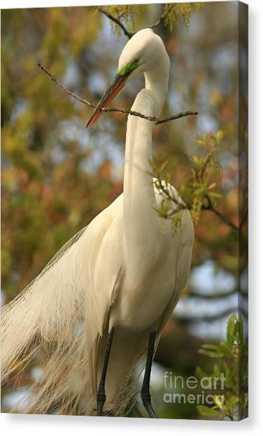 Great Egret Impressions Canvas Print