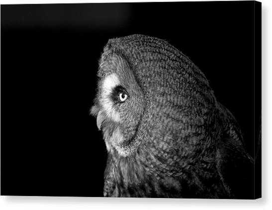 Great Grey Owl 6 Canvas Print by Simon Gregory