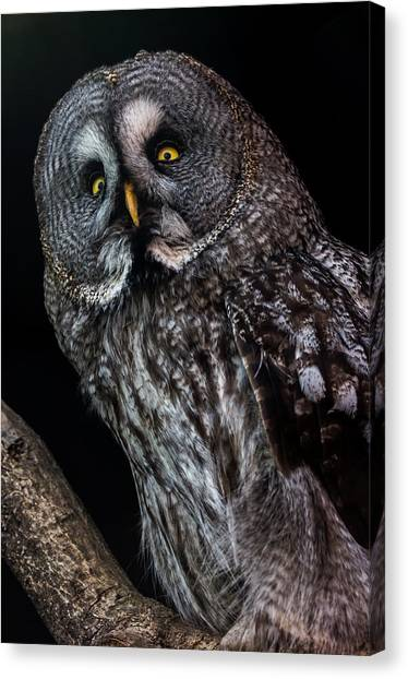 Great Grey Owl Canvas Print by Gerard Pearson
