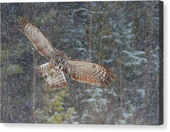 Ottawa Canvas Print - Great Grey Owl In Snowfall by Jim Cumming