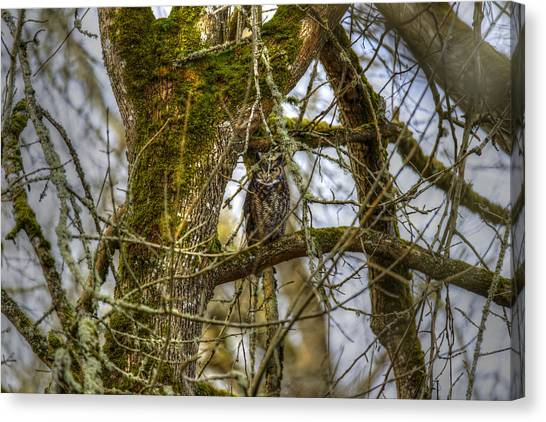Great Horned Owl Canvas Print by David Yack