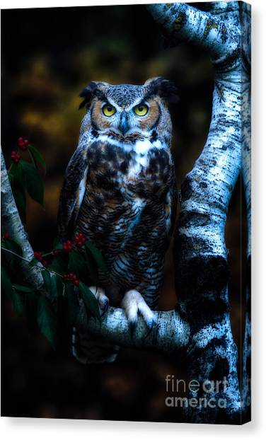 Great Horned Owl II Canvas Print by Todd Bielby