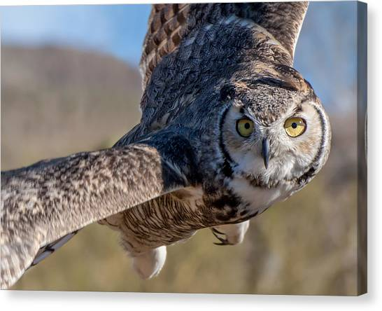 Great Horned Owl In Flight - Coming At-cha Canvas Print