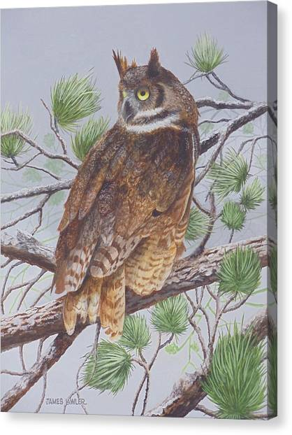 Great Horned Owl Canvas Print by James Lawler