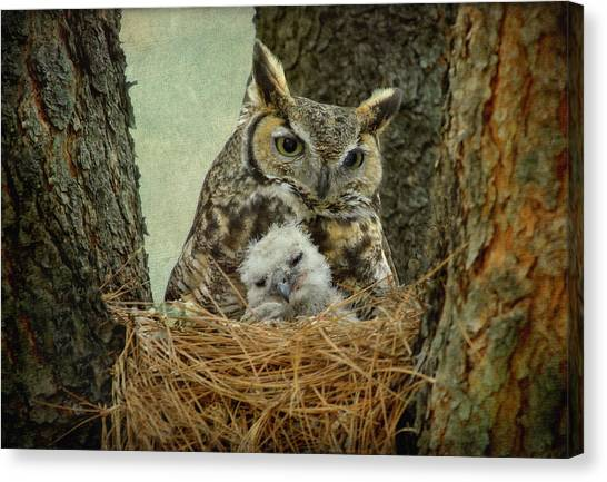 Great Horned Owl Mom And Baby Canvas Print by Cgander Photography