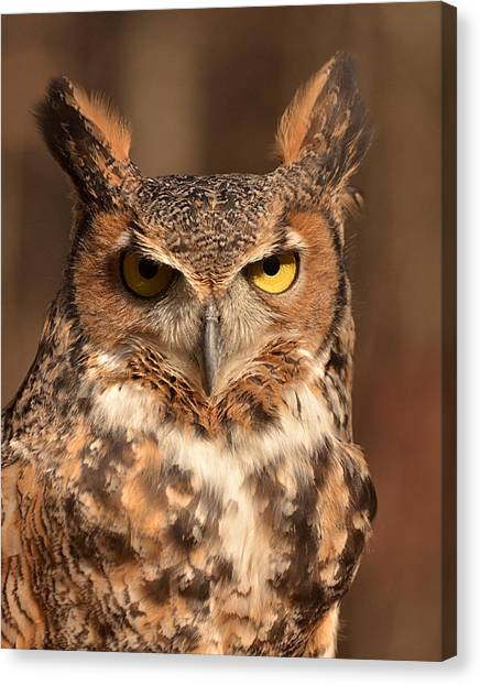 Great Horned Owl Canvas Print by Nancy Landry