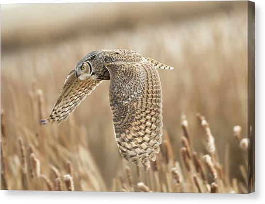 Owls Canvas Print - Great Horned Owl by Peter Stahl