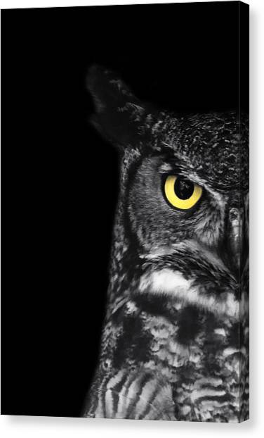 Owls Canvas Print - Great Horned Owl Photo by Stephanie McDowell