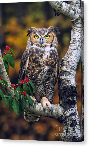 Great Horned Owl Canvas Print by Todd Bielby