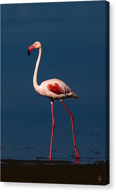 Great Morning Beauty Canvas Print by Jeppsson Photography