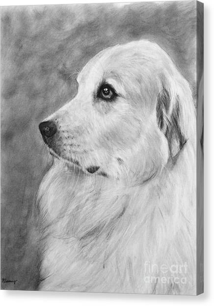 Great Pyrenees In Profile Drawing Canvas Print