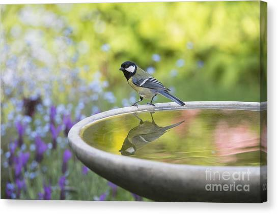 Titmouse Canvas Print - Great Tit Reflection  by Tim Gainey