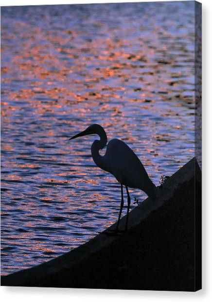 Great White Egret Silhouette  Canvas Print