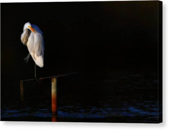 Great White Evening Canvas Print