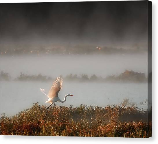 Great White Heron In Morning Mist Canvas Print