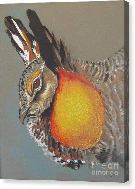 Greater Prarie Chicken Canvas Print