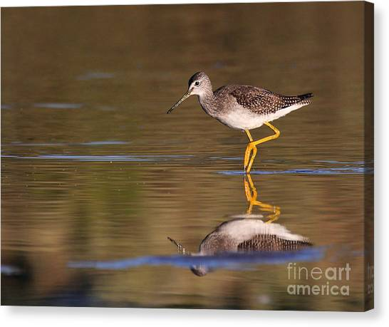 Greater Yellow Legs Canvas Print