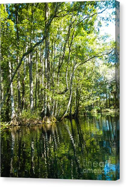 Gree Trees And Water  Canvas Print