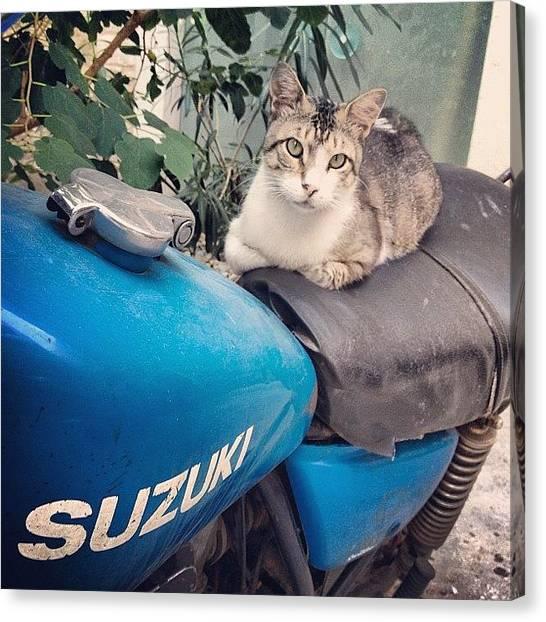 Suzuki Canvas Print - #greek #suzuki #cat #cats #catsagram by Denis Makhanko