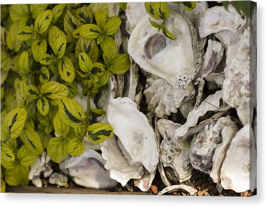 Green Abalone Canvas Print