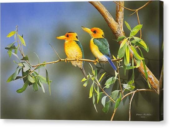 Green And Gold - Yellow-billed Kingfishers Canvas Print