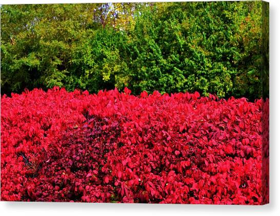 Green And Red Autumn Canvas Print