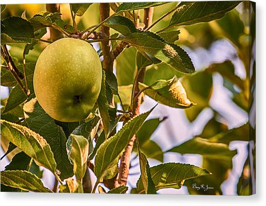Green Apple Canvas Print by Barry Jones