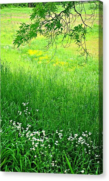 Green Canvas Print by Beverly Hammond