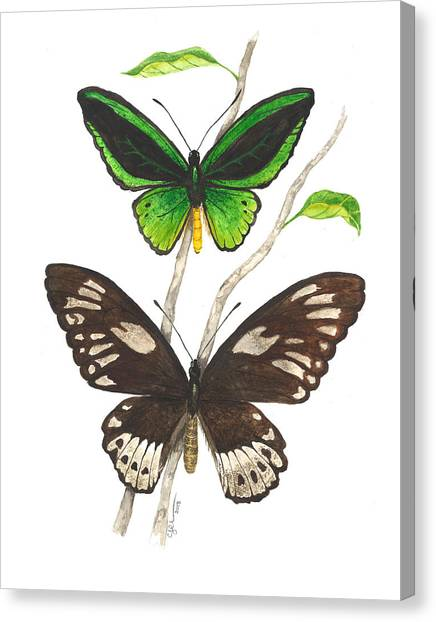 Green Birdwing Butterfly Canvas Print