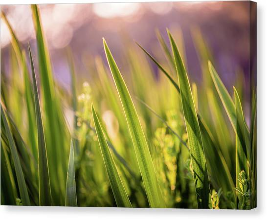 Blade Of Grass Canvas Print - Green Blade Grass by Mabry Campbell